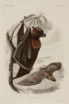 10436248