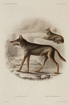 10436249
