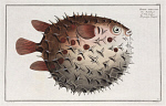 10425250