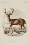 10436252