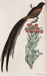 10423553