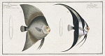 10425253