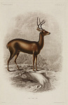 10436253