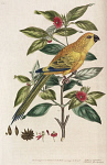 10423555