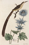 10423556
