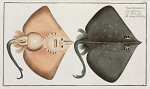 10425258