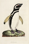 10423584