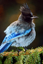 10648397