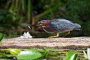 10648445