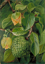 10694540