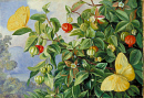 10694550