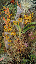 10694570