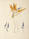 10694798