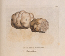 10694890