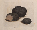 10694891