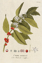 10694935