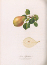 10694977