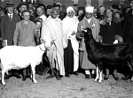 10323548