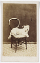 10597525