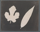 10660000