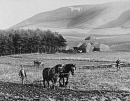 10686156