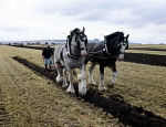 10314583