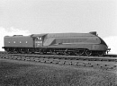 10653033