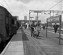 10688443